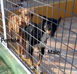 Malaga pererra pods 1 250 1 2014