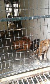 Seville perrera 8 pods 1 170