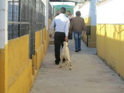 Seville perrera galgo 250 4 12 2015