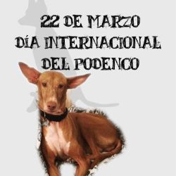 Spanish Day of the Podenco 22 March 250