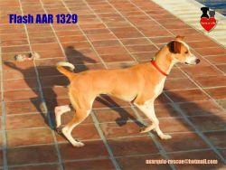 Axarqula rescue Flash 250  4 2016