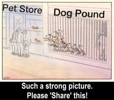 Pet shop perrera poster 400