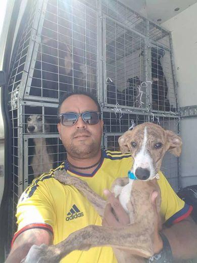 Scooby Marazzon puppy 390 4 2017