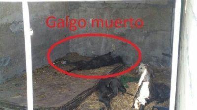 Scooby dead galgo 400  3 6 2017