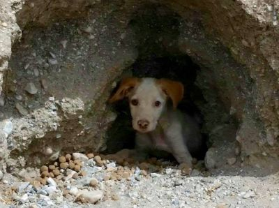 Bev pups in cave 400 7 2017