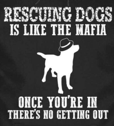 Rescuing dogs is like the Mafia 400