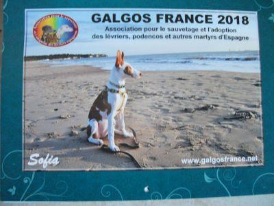 Galgos France 2018 calendar 400
