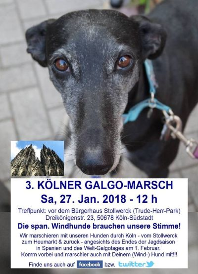 Galgo Walk Germany 400  27 1 2018