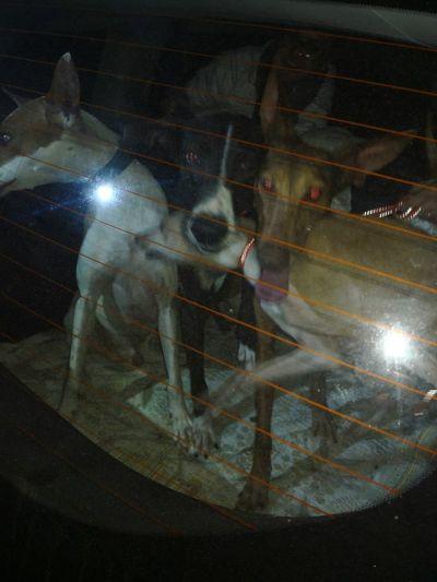La Palma dogs 2 400 24 3 2018