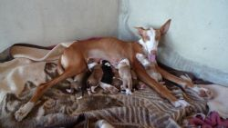 PEPA Bonnie and pups 250 26 8 2014
