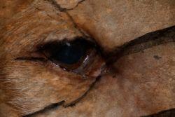Henna Denzil eye