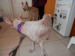 Little pod vet 2 dogs 250 5 2015