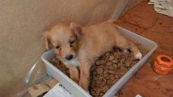 Bev pup tray 250 21 7 2015