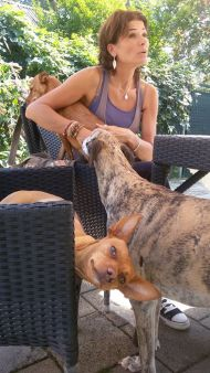 Scooby podenco cooeee 190 8 2015