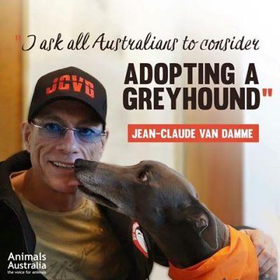 Australian greyhounds adopt 400