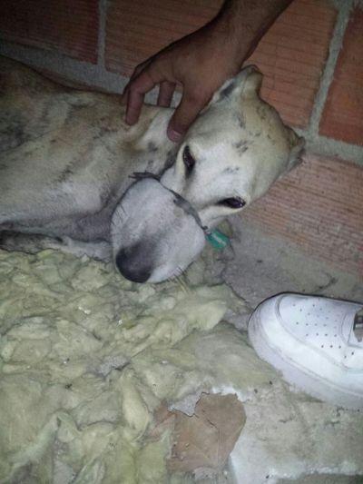 Rescata Animal Granada 400  5 10 2016