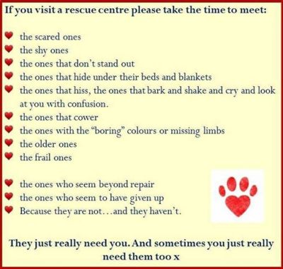 Visiting a rescue shelter rules 400