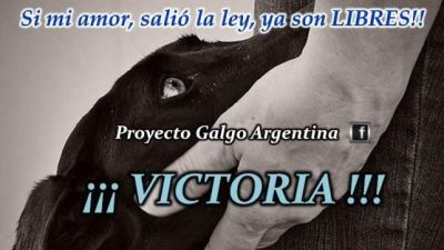 Argentina bans galgo racing 1 400