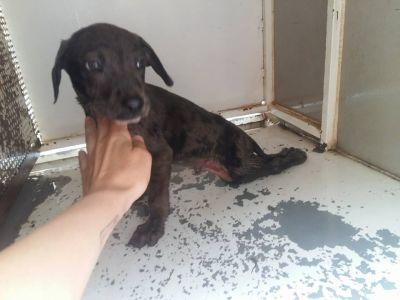 Olivenza perrera 1 pup 400