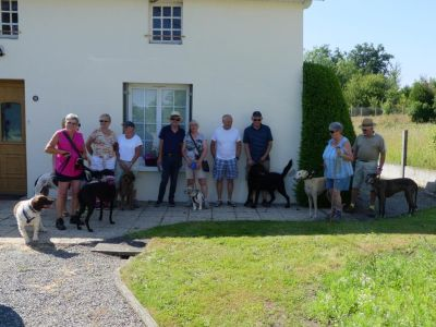 Great Global Greyhound Walk 400 2017