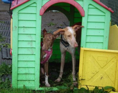 Podenco play school 14 400