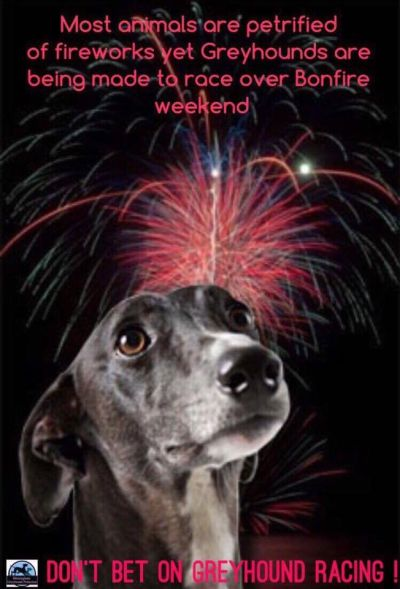 Greyhounds fireworks 400