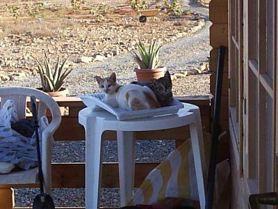 David T more cats