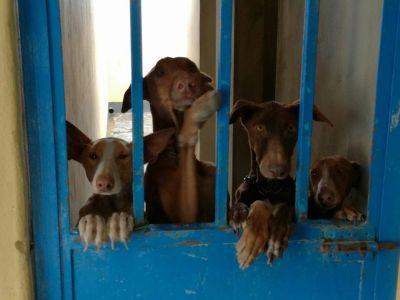 Fuerteventura 4 dogs 400