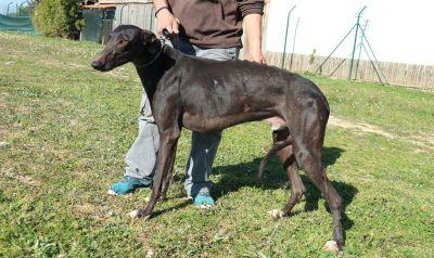 Dogs of Portugal Sasu 400 3 2018
