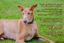 Henna Denzil poem