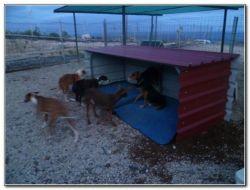 Tierra Blanca kennels dogs 1 250 10 2014