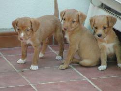 Bev 3 pups 1 250 21 7 2015