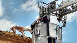 Bev podenca roof rescue 250