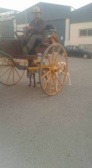 Carriage training galgos 3 190
