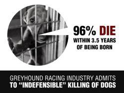 Australia greyhound racing stats 250