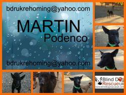 Black podenco Martin bdruk 3 2016 250