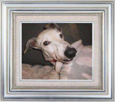 Last Chance animal resce Gracie 400 11 2016