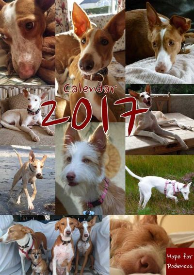 Hope for Podencos Calendar 400 2017