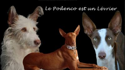 Podenco petition poster 400 10 1 2017