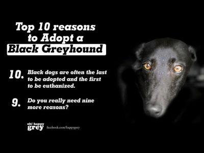 Black greyhound adopt poster 400