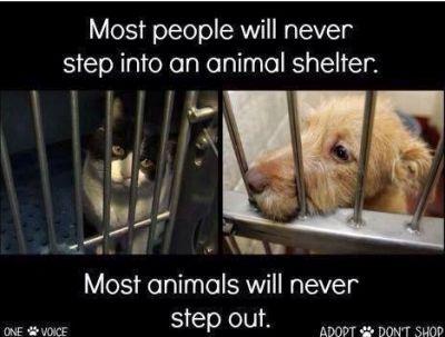 Animal shelter 400