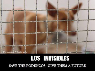 Los Invisibles 400