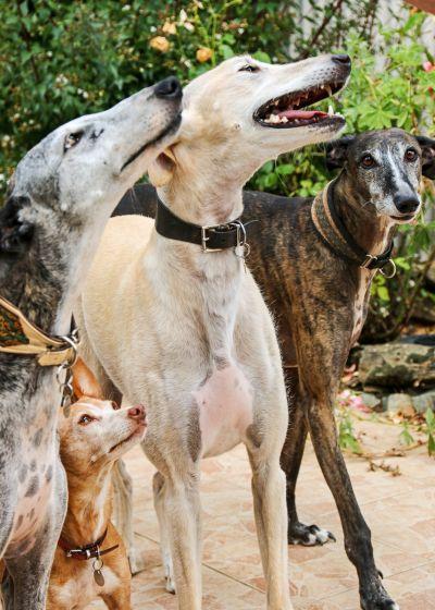 4 dogs terrasse 400 8 2016