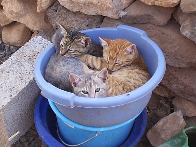 David Tomlinson cats