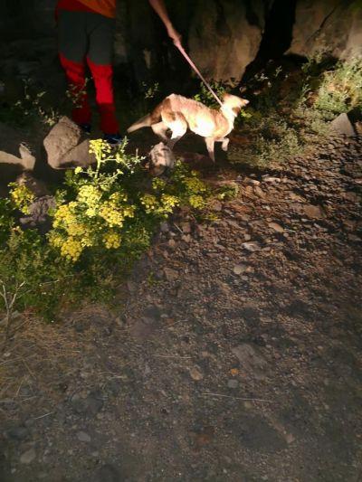 La Palma dogs out 1 400 23 3 2018