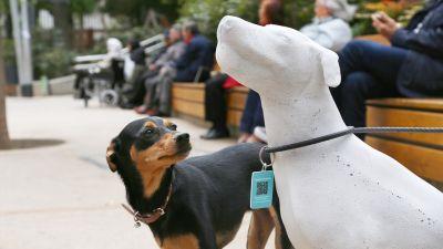 Barcelona statue dog 2 400