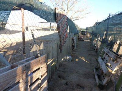 Scooby shelter 3 400