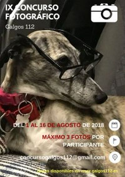 Galgos 112 photo comp for 2019 calendar 400 2 8 2018