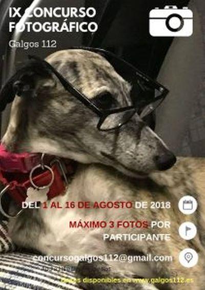 Galgos 112 photo comp for 2019 calendar 400 2 8 2018