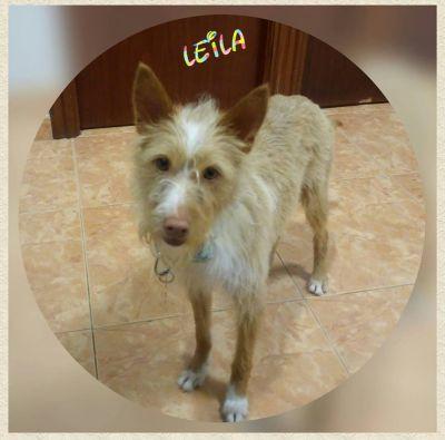 Protectora Animals Morrazo Leila 400 11 2018